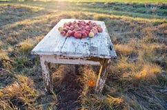 在桌上的苹果在草甸在秋天早晨 免版税库存照片