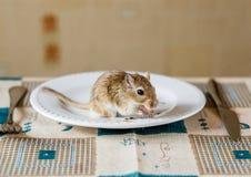 在桌上的蒙古沙鼠ehave晚餐 图库摄影