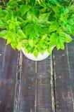 在桌上的辣椒粉植物 免版税库存照片