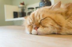 在桌上的逗人喜爱的猫睡眠 图库摄影