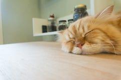 在桌上的逗人喜爱的猫睡眠 免版税库存图片