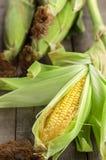 在桌上的金黄新鲜的农厂玉米 库存图片