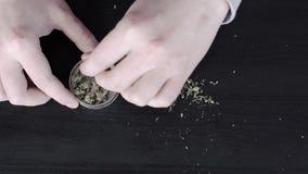 在桌上的医疗大麻 人` s手在研的一台草本研磨机投入大麻 股票视频