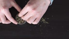 在桌上的医疗大麻 人` s手在研的一台草本研磨机投入大麻 股票录像