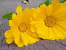 在桌上的黄色花 免版税库存照片