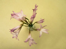在桌上的紫色花 库存图片