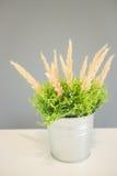 在桌上装饰的植物桶 免版税库存照片