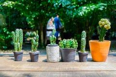 在桌安置的罐的仙人掌由木头制成 免版税库存照片