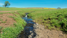 在桌山生态蜜饯的小河 免版税库存图片