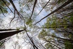 在桌山的春天树 免版税图库摄影