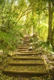 在桌山的走的足迹楼梯 免版税库存照片
