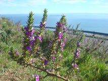 在桌山,开普敦,南非的花 免版税库存照片