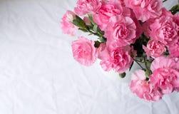 在桌布的桃红色康乃馨 免版税库存图片