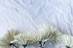 在桌布的Chyrsanthemums 免版税库存照片