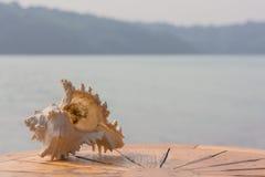 在桌海背景的壳 图库摄影