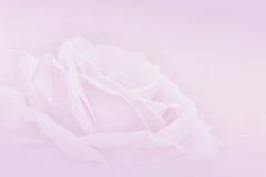 在桑树纸背景的软和被弄脏的罗斯花VA的 图库摄影