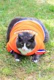 在桔子的Obesicat 免版税图库摄影