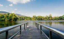 在桥梁前面的森林 库存照片