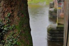在桥梁旁边的树 图库摄影