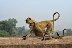 在桥梁的两只猴子 免版税库存图片