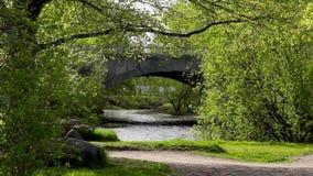 在桥梁的汽车运动在河在好的城市公园 股票视频
