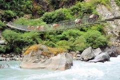 在桥梁的驴有蓬卡车,尼泊尔 库存照片