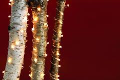 在桦树分行的圣诞灯 免版税库存照片