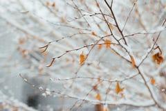 在桦树叶子的树冰在11月早晨 图库摄影