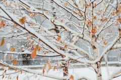 在桦树叶子的树冰在11月早晨 库存图片