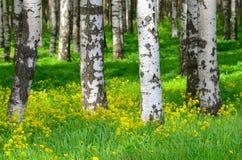 在桦树木头的树 免版税图库摄影