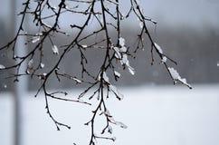 在桦树的冰柱 免版税库存图片