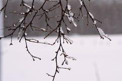 在桦树的冰柱 图库摄影
