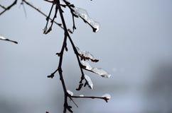 在桦树的冰柱 库存图片