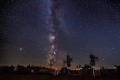 在桦树的银河 免版税库存照片