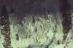 在桦树纹理的接近的吠声 免版税库存图片