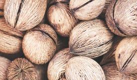 在桶关闭的外果皮被剥皮的椰子  免版税库存照片