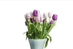 在桶版本2的白色背景隔绝的桃红色和白色郁金香春天花束  库存图片