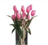 在桶版本4的白色背景隔绝的桃红色郁金香春天花束  免版税库存照片
