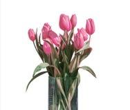 在桶版本5的白色背景隔绝的桃红色郁金香春天花束  免版税库存图片