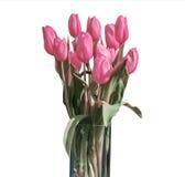在桶版本6的白色背景隔绝的桃红色郁金香春天花束  免版税库存照片