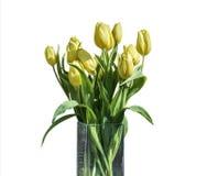 在桶版本5的白色背景隔绝的黄色郁金香春天花束  库存图片