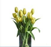 在桶版本2的白色背景隔绝的黄色郁金香春天花束  库存照片