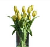 在桶版本4的白色背景隔绝的黄色郁金香春天花束  库存图片