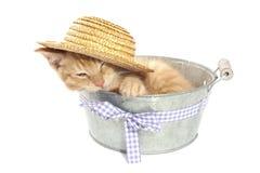 在桶的小猫 图库摄影
