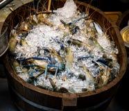 在桶的新鲜的大虾 库存照片