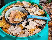 在桶的橡木叶子用水 库存图片