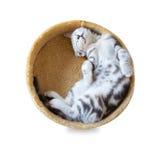 在桶的猫睡眠 免版税库存图片