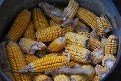 在桶的玉米 免版税图库摄影