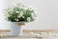在桶的白花在木桌上 免版税库存照片