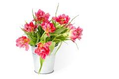 在桶的红色郁金香 免版税库存图片